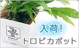 wp_toropika0427.jpg